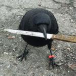 【カナダで有名な悪党?】犯罪現場から証拠のナイフを持ち去ったカラス