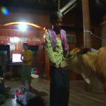 カンボジアの未亡人が【夫の生まれ変わりの仔牛】と生活